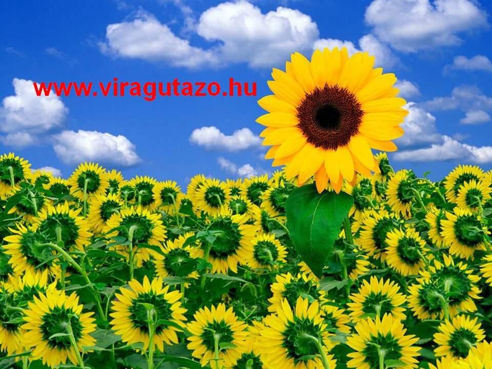 Virágutazó blog