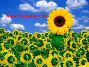 Virágutazó kezdő oldal
