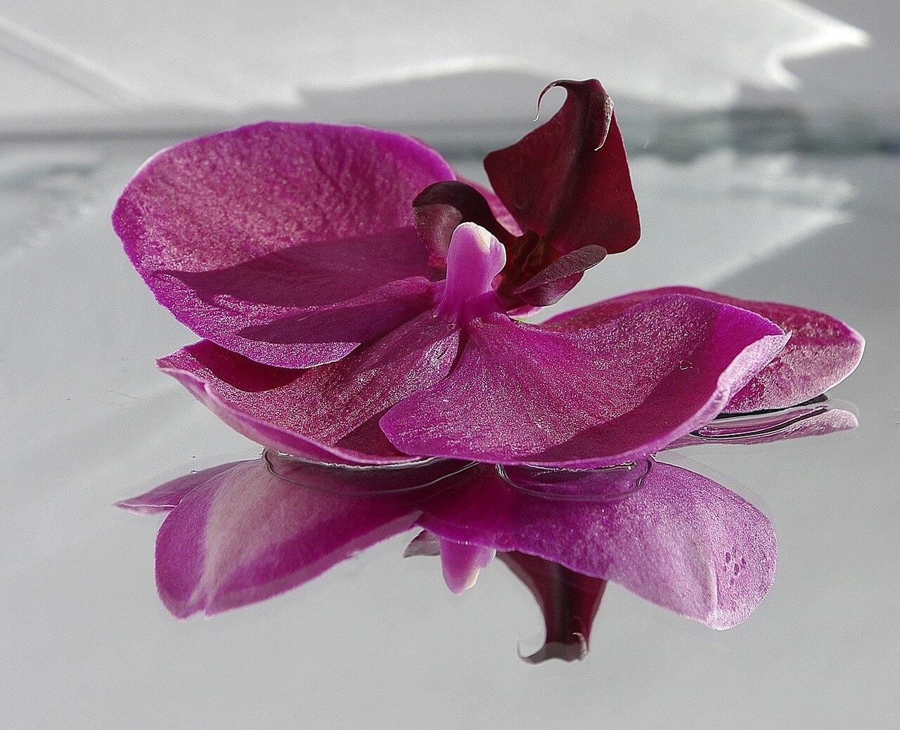 flower-976459_1280